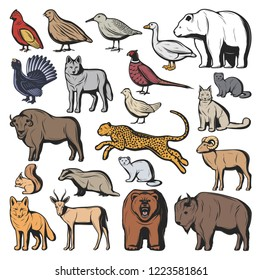 Forest and savannah animal vector characters, hunting sport. Bear and wolf, lynx and jaguar, squirrel and nutria, fox and buffalo, goat and gazelle. Quail and pheasant, duck and blackcock birds