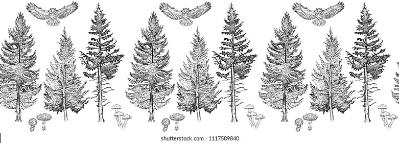 Forest seamless border ornament: spruce, fir tree, mushrooms, owl. Endless horizontal pattern brush. Isolated elements for invitation, greeting card, pattern design, poster, decoration, textile print.