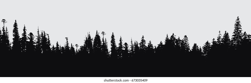 forest silhouette background.View to realistic coniferous trees.Vector monochrome version