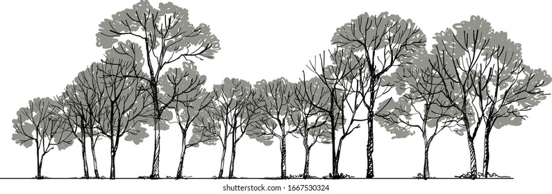 Forest Sketch ing Vector ,Tree Drawing