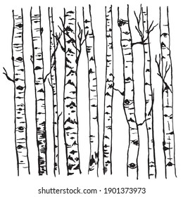 Forest texture. Birch tree trunks with branches vector drawing black and white graphics isolated.