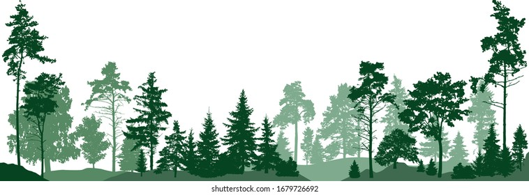 Forest trees. Isolated on white background. Vector illustration
