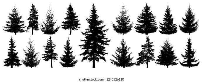 Forest trees set. Isolated vector silhouette. Coniferous forest. Christmas tree, fir-tree, pine, pine-tree, Scotch fir, cedar