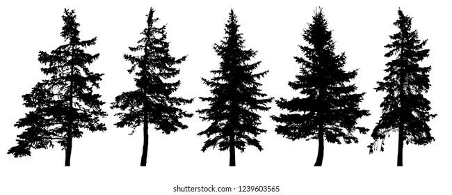 Forest trees silhouette. Isolated vector set. Christmas tree, cedar, fir-tree, pine, pine-tree, Scotch fir