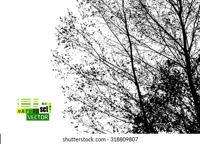 Forest trees silhouette. Vector