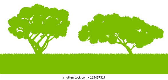 Forest trees silhouettes landscape illustration background vector card template concept