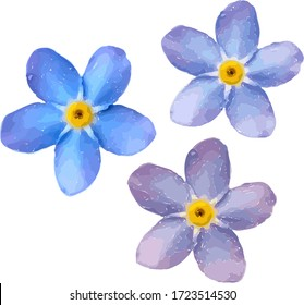 Forget me not flower isolated on white background. Blue and pink bloom. Vector illustration.