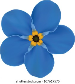 Forget-me  Blue Flower Isolated