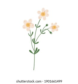 Forget-me-not flower isolated on white background. Delicate blooming forgetmenots. Botanical floral element. Colorful flat vector illustration
