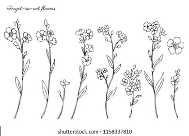 Forget-me-not flowers vector illustration isolated on white background, ink sketch, decorative herbal doodle, line art style for design medicine, wedding invitation, greeting card, floral cosmetic