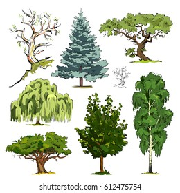 Forms of tree crowns