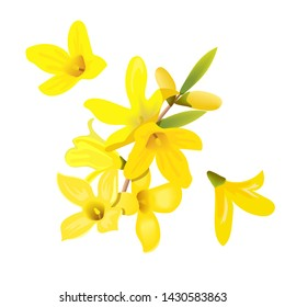 Forsythia suspensa flowers branch and flowers. Card template. blossoming yellow spring tree. Golden Bell, flowers boxing. Vector illustration. For prints, poster, flyer, flier, text copy space