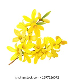 Forsythia suspensa, fluffy spring tree branch. Golden Bell, blossoming yellow flowers. Vector illustration. Spring decor. leuropaea blooming in garden bush for prints, posters, cards