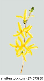 Forsythia watercolor vector
