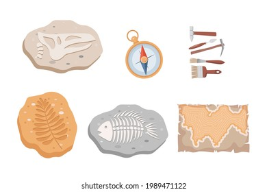 Fossil fish and dinosaurs skeletons and plants, compass, map, and archeology tools vector flat illustration isolated on white background. Stone sections with bones and prehistoric herbs.