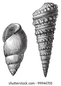 Ocean Fossils Images, Stock Photos & Vectors | Shutterstock