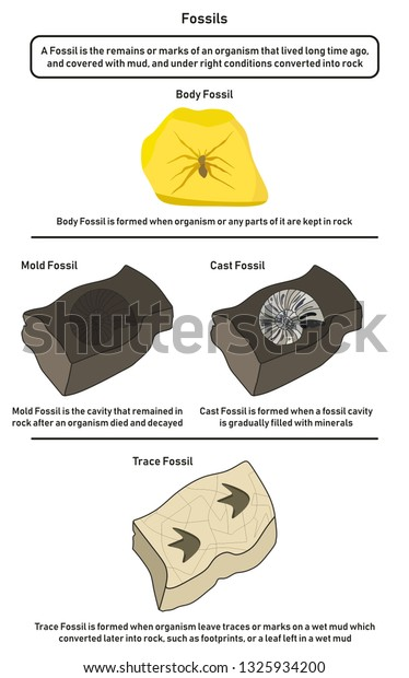 Fossils Infographic Diagram Including Body Mold Stock Vector