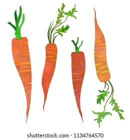 Four carrots set with green tops. Cartoon clip art illustration on white background. Watercolour imitation.