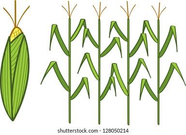 Four corn stalks and a corn cob.