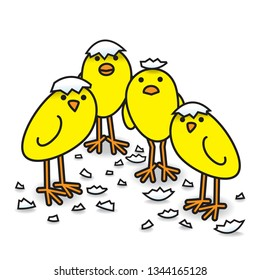Four Cute Freshly Hatched Yellow Chicks in a tight group with Egg Shell Fragments Staring towards camera
