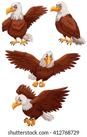 Four eagles in different actions illustration