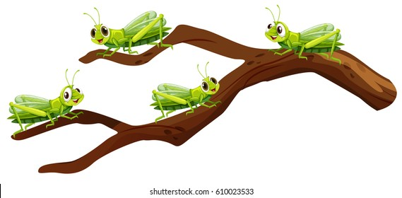 Four grasshoppers on branch illustration