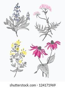 Four herbs set