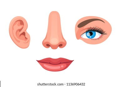 Four human face parts or sensory organs set. Nose, ear, eye, mouth. Educational anatomy visual aid poster template. Colorful clipart design. Flat vector illustration isolated on white background