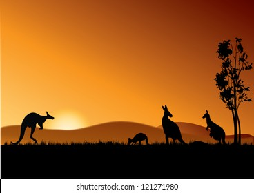 four kangaroos feeding in the bright sunset