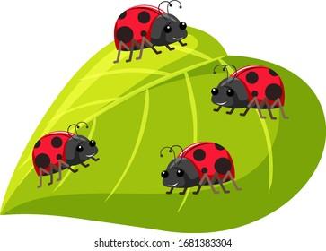 Four ladybugs on green leaf on white background illustration