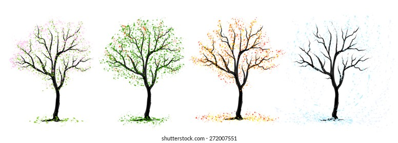 Four seasons of the cherry tree on white background, vector
