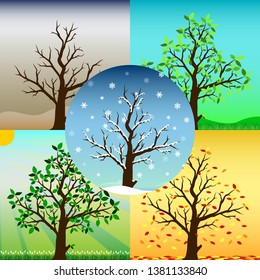 Four seasons of tree contain Spring Summer Autumn Winter and the dead one with weather background