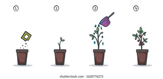 Four Steps of Gardening Process Colorful Drawing Illustration Information