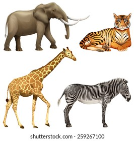 Four wild African animals on a white background