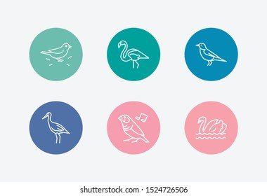 Fowl icon set and swan with sparrow, finch and flamingo. Robin bird related fowl icon vector for web UI logo design