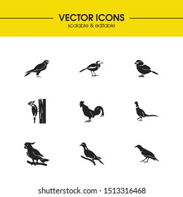 Fowl icons set with woodpecker, pheasant and sparrow elements. Set of fowl icons and pigeon concept. Editable vector elements for logo app UI design