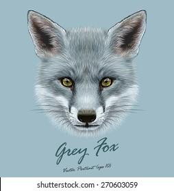 Fox animal face. Vector cute grey head. Realistic winter fur grey wild fox portrait on blue background.