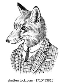 Fox dressed up in Suit. Aristocrat or old gentleman. Fashion Animal character sketch. Hand drawn Anthropomorphism. Vector engraved illustration for label, logo and T-shirts or tattoo.