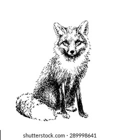 Fox engraved illustration. Vector