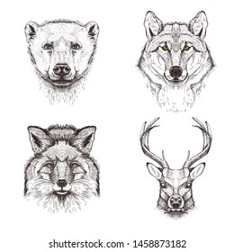 Fox, wolf, bear and deer. Set of vector images of wild animals. Sketch graphics.