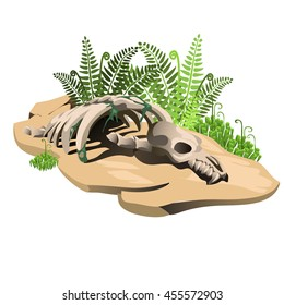 A fragment of the skeleton of the ancient animal fossil on land isolated on white background. Vector cartoon close-up illustration.