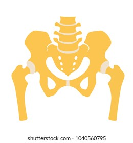 Fragment of the structure of the human skeleton. Pelvic girdle and thighs. Connective cartilaginous tissue. Silhouette. Sign. Vector. Flat design