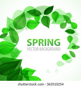 frame branch with fresh green leaves. Vector Illustration