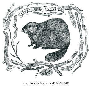 Frame of Driftwood and a beaver Sketch style Hand drawing