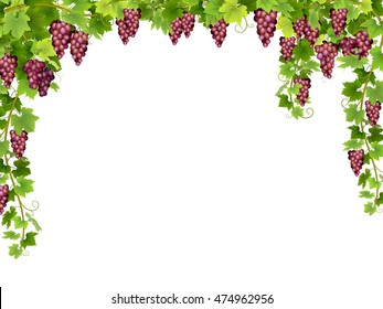 Frame from hanging bunches of ripe red grapes with branches and leaves. Vector realistic illustration.