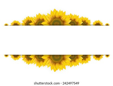 Frame of sunflowers on a white background