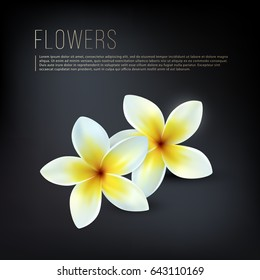 Frangipani flowers. Realistic flowers on the black background. Vector image with white flowers.