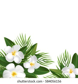 Frangipani and Palm leaves Isolated On White Background, Vector Illustration