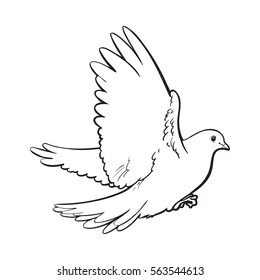 500 Dove Sketch Pictures Royalty Free Images Stock Photos And
