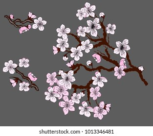 Free hand Sakura flower vector set, Beautiful line art Peach blossom isolate on white background